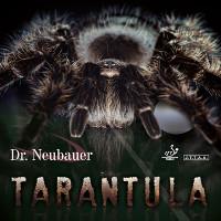 drneubauer-tarantula